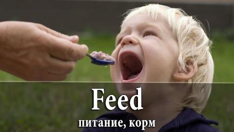 11Feed