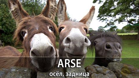 2Arse