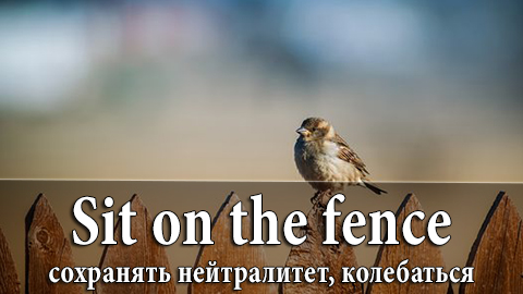 3Sit_on_the_fence
