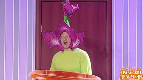 4Gladiolus