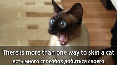 6Skin_Cat