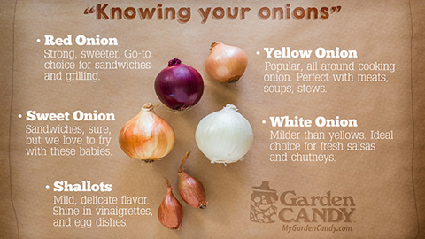 7Know_Onions