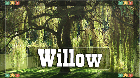 8 Willow