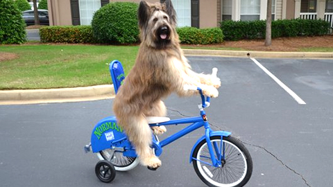 9Ride_a_Bike