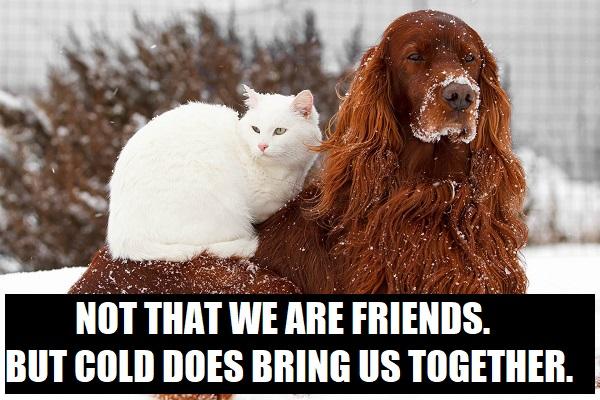 cold brings us together