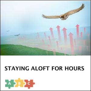 puzzle_aloft