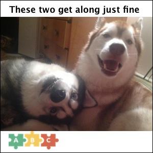 puzzle_get_along