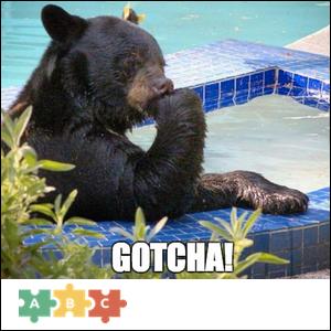 puzzle_gotcha_bear