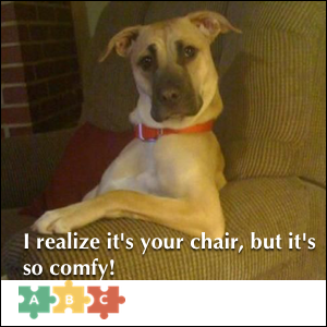 puzzle_i_realize_its_your_chair