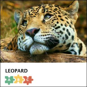 puzzle_leopard