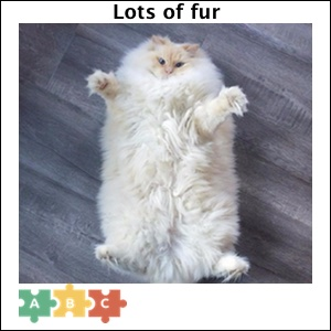 puzzle_lots_of_fur