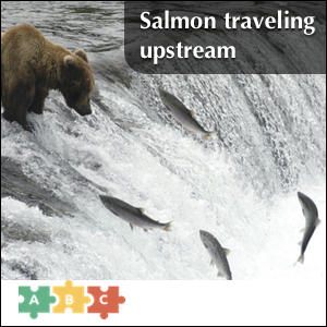 puzzle_salmon_traveling_upstream