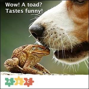 puzzle_tastes_funny