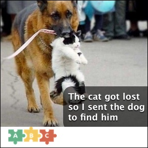 puzzle_the_cat_got_lost