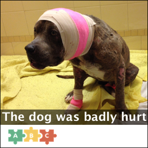 puzzle_the_dog_was_badly_hurt