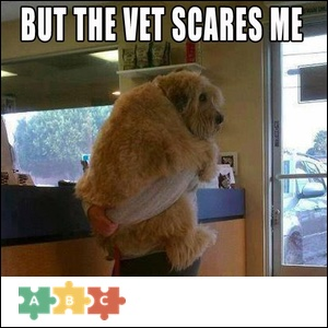 puzzle_the_vet_scares_me