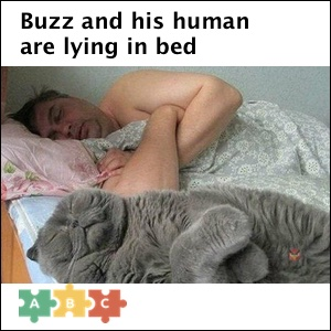 puzzle_they_are_lying_in_bed