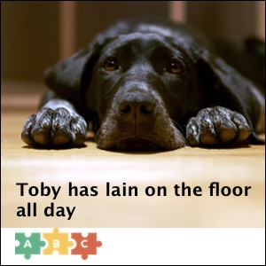 puzzle_toby_has_lain_on_the_floor_all_day