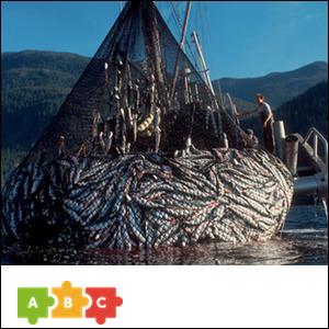 puzzle_trawl