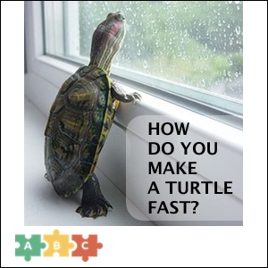 puzzle_turtle_fast