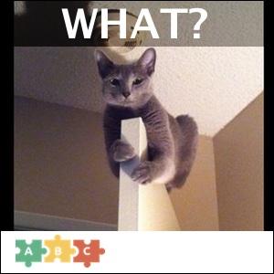 puzzle_what_cat