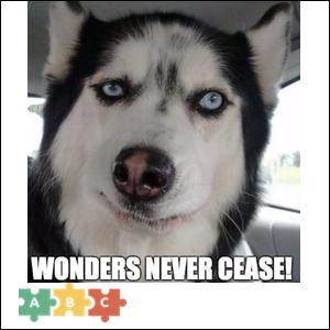 puzzle_wonders_never_cease