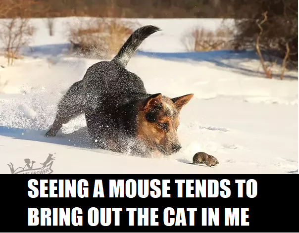 seeing a mouse