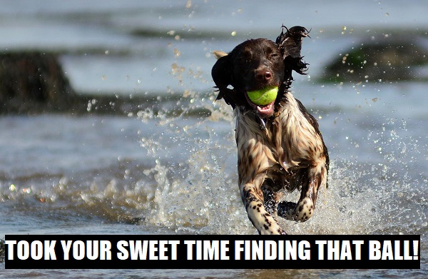took your sweet time finding that ball