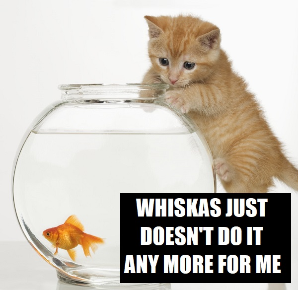 Kitten trying to get at a goldfish --- Image by © Royalty-Free/Corbis